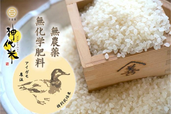 千葉県産 お米 コシヒカリ 合鴨農法 無農薬 美味しい 安全