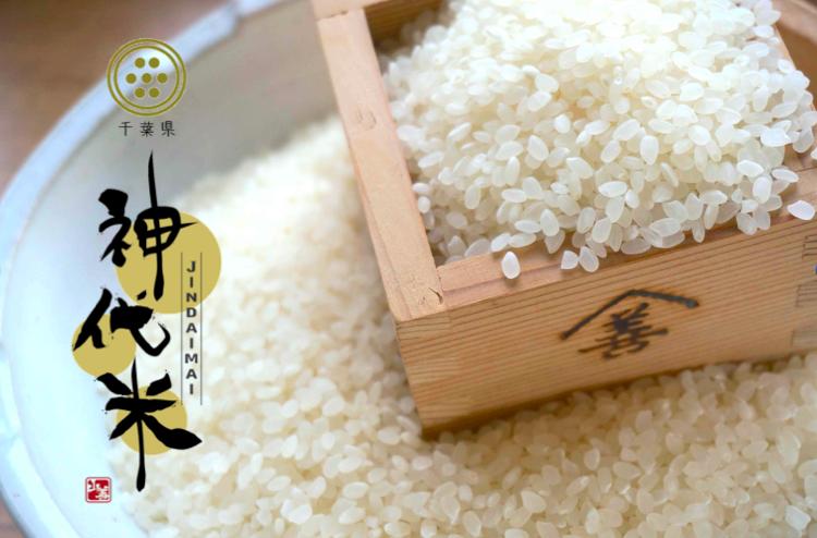 神代米 コシヒカリ 5kg おいしい もちもち ふっくら